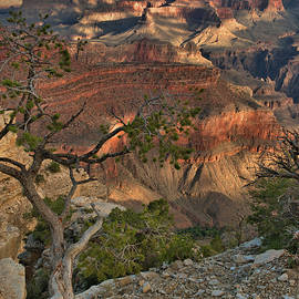 Stephen  Vecchiotti - Sunkissed Canyon