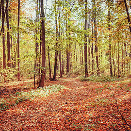 Marfffa Art - Sunlight in the Autumn Forest