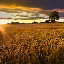 Debra and Dave Vanderlaan - Sunlight on the Wheat Fields