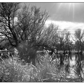 Gretchen Wrede - Sunlight over Pond Reflections and Cattails in Black and White