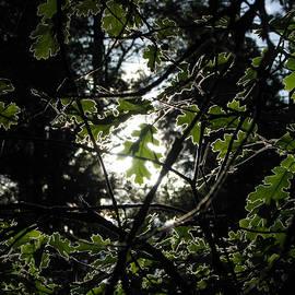 Chris Gudger - Sunlight Targets Leaf
