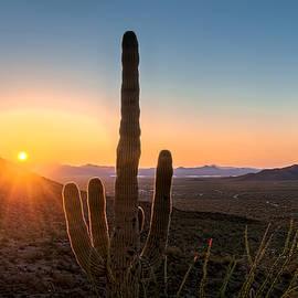 Maria Coulson - Sunlit Cactus