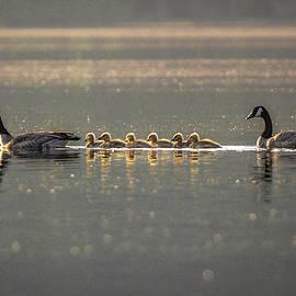 Joy McAdams -  The Golden Geese