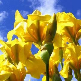 Will Borden - Sunlit Painted Irises