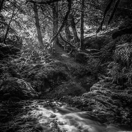 Gareth Burge Photography - Sunlit Woodland Glade, Mono