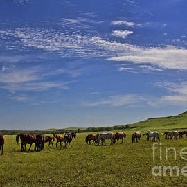 Crystal Nederman - Sunny Day in the Flinthills