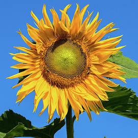 Peteris Vaivars - Sunny Day