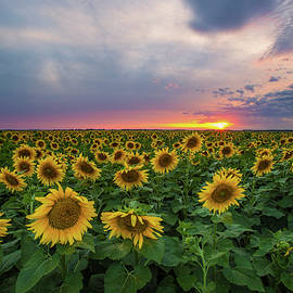 Sunny Disposition  - Aaron J Groen