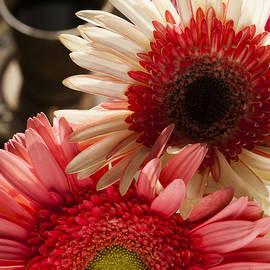 Yaniv Eitan - Sunny Flowers