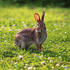 Brian Manfra - Sunny Bunny