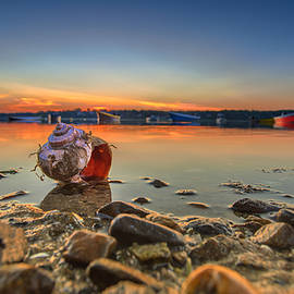 Dapixara Art - sunrise and Shell On The Beach