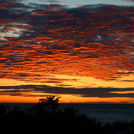 Dianne Cowen - Sunrise Drama by the Sea