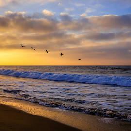 Pamela Newcomb - Sunrise Flight