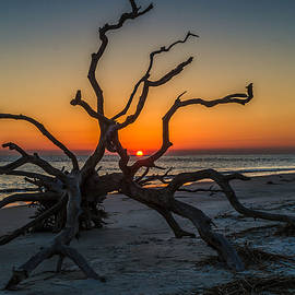 Eric Albright - Sunrise On Driftwood Beach