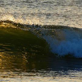 Dianne Cowen - Sunrise Roar