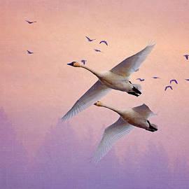 Angie Vogel - Sunrise Swans