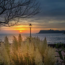 Cliff Miller - Sunrise through the Pampus Grass. Scalby Mills Scarborough.