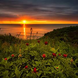 Evgeni Ivanov - Sunrise with peonies