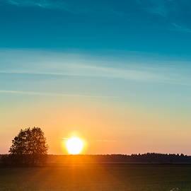 Jukka Heinovirta - Sunset And Birch Trees