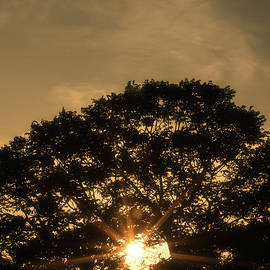 Sunset and Tree - San Salvador III
