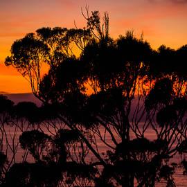 Bruce Pritchett - Sunset Delmar /Torrey pines San Diego California