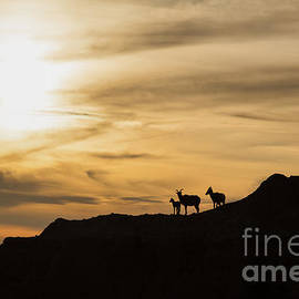 Natural Focal Point Photography - Sunset in Badlands