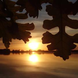 James Peterson - Sunset Oak