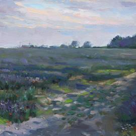 Sunset over the Field - Ylli Haruni