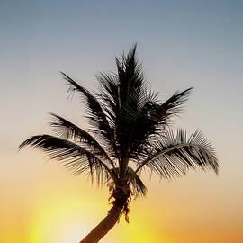 Sunset Palm - Az Jackson