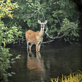 Judy Johnson - Sunset River Doe
