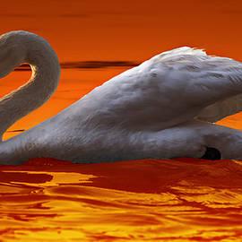 Brian Stevens - Sunset Swan 3