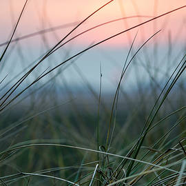 Karen Lawrence  SMPhotography - Sunset  through the marsh grass