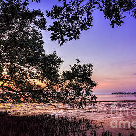 Marvin Spates - Sunset Under The Mangroves