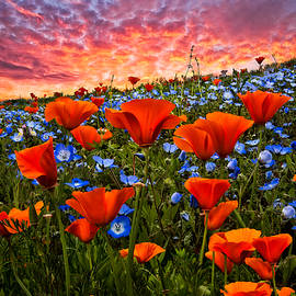 Debra and Dave Vanderlaan - Sunset Wildflowers