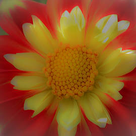 Debra Waddell - Sunshine and Flowers