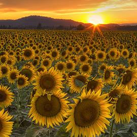 Mark Kiver - Sunshine and Happiness