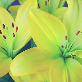 Iryna Goodall - Sunshine In Petals