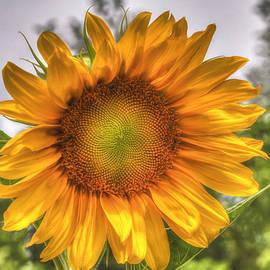 Donna Kennedy - Sunshine On A Cloudy Day