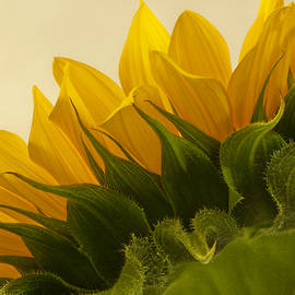 Sandra Foster - Sunshine Under The Petals