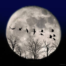 Brian Wallace - Supermoon Geese Silhouette