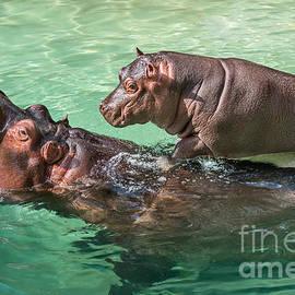 Jamie Pham - Surfing Baby Hippo