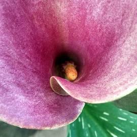 Kathy Barney - Swallowed in Pink