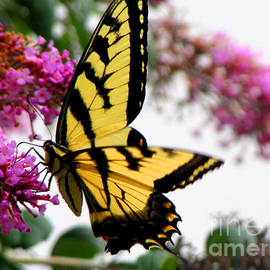 Gardening Perfection - Swallowtail Beauty