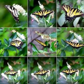 Travis Truelove - Swallowtail Collage