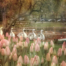 Joann Vitali - Swan Boats and Tulips - Boston Public Garden