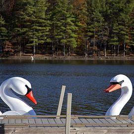 Joanna Madloch - Swan Boats