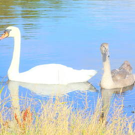 Hilde Widerberg - swan f