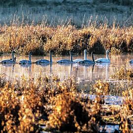 Swan Family - Thomas Ashcraft