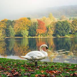 Chathura Kodikara - Swan in the Autumn