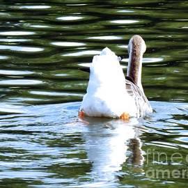 Robyn King - Swan Lake #2